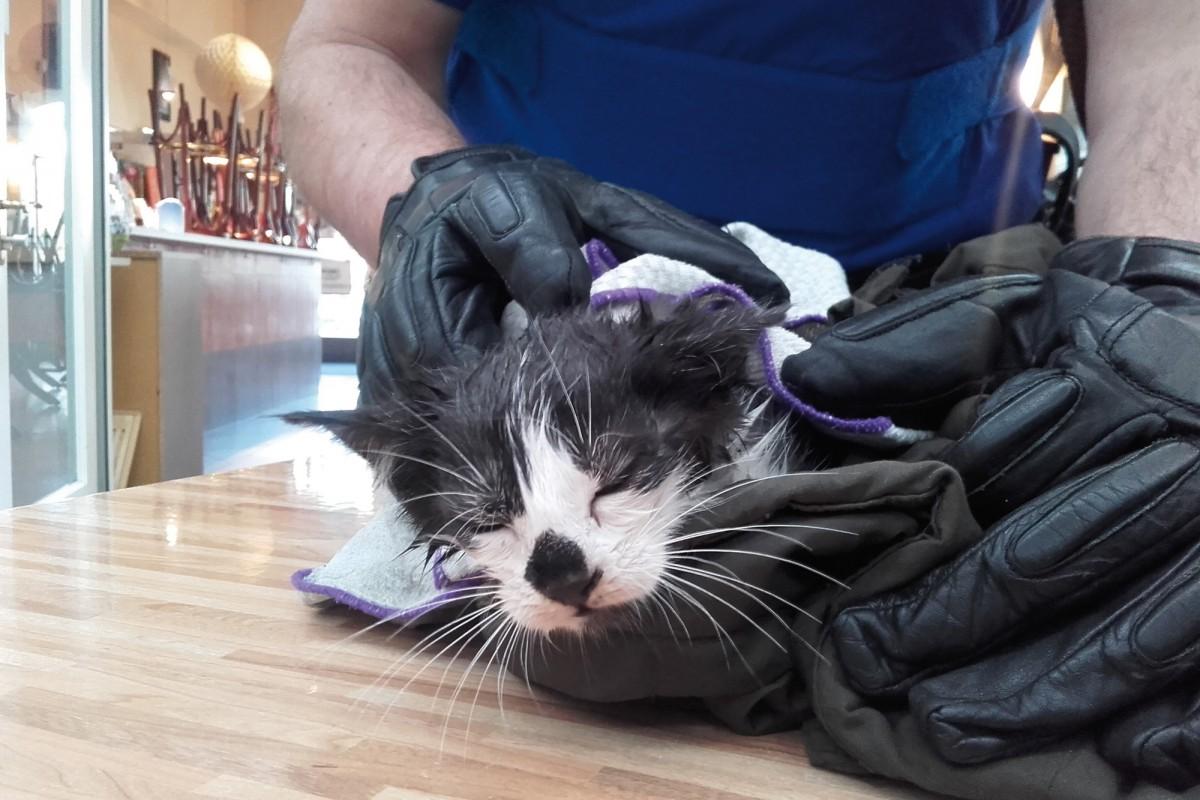Un chaton sauvé des canalisations