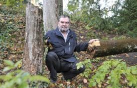 Jacques Miéville, près de l'arbre qu'il a dû abattre lundi avec ses voisins. Ci-contre, le premier érable vandalisé. © Michel Duperrex