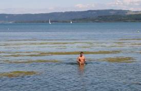 Claude, en train d'arracher des algues.