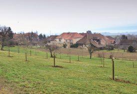 L'organisation Pro Natura Vaud a hérité de ce verger, où elle a planté des arbres hautes tiges de différentes variétés. ©Carole Alkabes