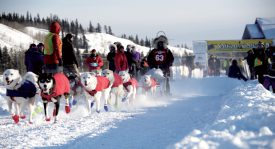 Marcelle Fressineau à son départ de la Yukon Quest, en 2013, avec son traîneau tiré par ses deux meilleurs Alaskan Husky, Mister X (devant à g.) et Morrison (devant à dr.). ©DR