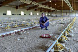 Jacques Nicolet prend la pose dans la halle d'engraissement de poulets qu'il exploite avec son fils Jonathan. ©Michel Duperrex