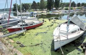 Une faucardeuse a fauché les algues au milieu du port, la semaine passée. ©Carole Alkabes
