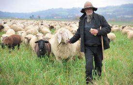 Avec son chapeau bergamasque et son bâton de berger, Pascal Eguisier, ne passe pas inaperçu dans la région du Nord-vaudois. ©Carole Alkabes