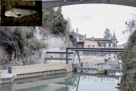 L'ascenseur à poissons -le tuyau à droite de l'image- serait boudé par les truites, qui finiraient hachées par la turbine située à proximité. ©Pierre Blanchard et DR