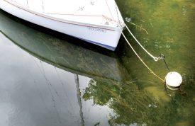 Par endroits, les bateaux sont «pris au piège» par les plantes. ©Michel Duperrex