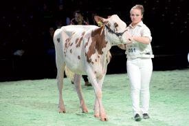 Johanna Poncet, avec Joofi, durant le Showmanship de Swiss Expo. ©Michel Duperrex
