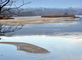 Le phénomène est particulièrement visible à l'Ile aux oiseaux des Vernes, à Yverdon-les-Bains, et à l'embouchure de la Menthue (photo en page de gauche). ©Michel Duperrex