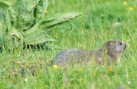 Ce mammifère herbivore a de quoi trouver son bonheur dans ce pâturage. © Michel Duperrex