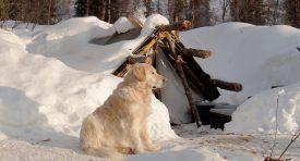 Devant la tente qui a servi d'abri durant trois mois d'hiver, le chien de Nicolas Reymond admire la clarté du soleil. ©DR