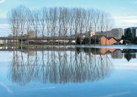 Une occasion unique, pour les arbres d'Yverdon-les-Bains, de se dédoubler majestueusement. ©Michel Duperrex / Com.