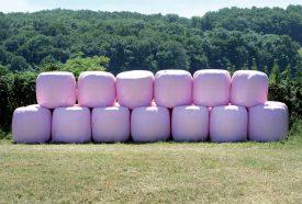 Des balles roses aux airs de marshmallows trônent à Villars-sous-Champvent. ©Michel Duperrex