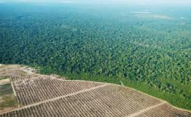 Les changements de couleurs entre les zones intactes et les zones déforestées de la forêt amazonienne sont détectés par les satellites de la NASA et analysés, en temps réel, par le programme Terra-i. © Terra-i project