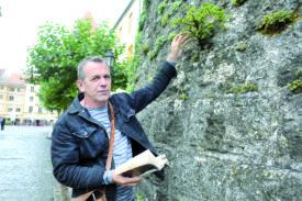 Pas besoin d'aller dans la forêt pour observer la flore vaudoise. Sur les murs du château médiéval de la ville, Christian Clerc a notamment pu identifier la présence d'un if, qui a poussé sur la tour sud-ouest de l'édifice.© Michel Duperrex