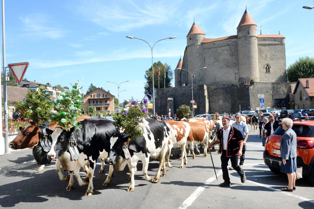 Les vaches des Grandsonnaz retrouvent la plaine