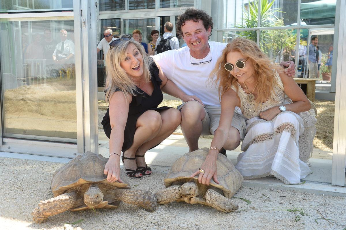 Pendaison de crémaillère chez les tortues