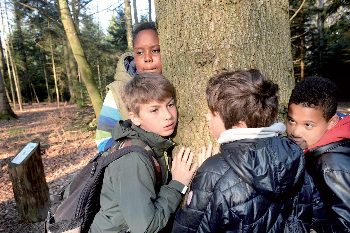 Un petit lutin taquin enchante une forêt magique