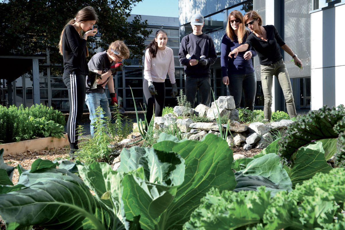 La permaculture s'invite à l'école