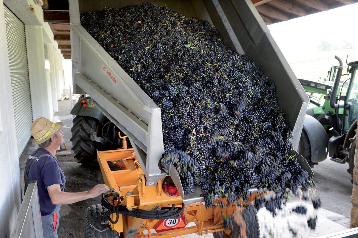 La qualité des vin vaudois menacée