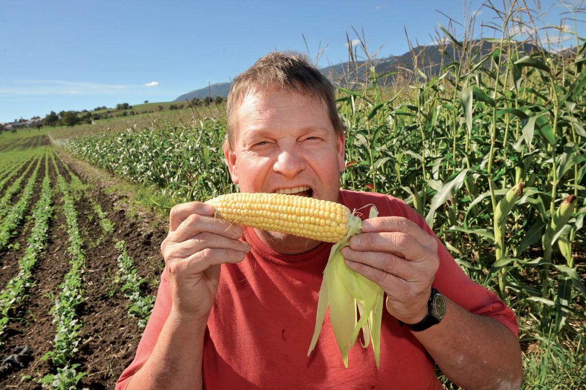 Maïs très précoce en avant-première