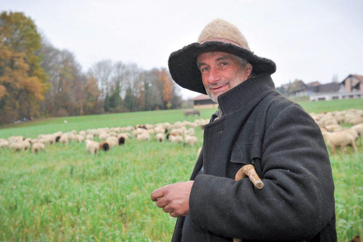 Un berger revient à ses moutons dans le Nord-vaudois
