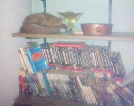 Peu farouche, l'animal s'est couché sur l'une des étagères de la bibliothèque. ©DR