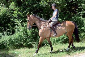Si la mise à l'enquête est acceptée, Anne Favre et son cheval pourront se balader sur des pistes cavalières, en toute sécurité et conforme à la loi. ©Michel Duvoisin
