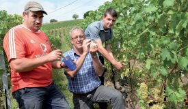Le viticulteur Jacques Bloesch, de Bonvillars, fait une mesure du degré Oeschle sur du chasselas, entouré de son employé Gilberto Vicente (à g.) et de son fils Léonard. ©Michel Duperrex