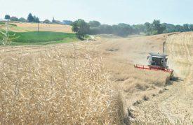 La récolte 2016, supérieure en terme de tonnage de 11,5% à celle de 2015, s'explique par une augmentation des ventes de semences de céréales, et une meilleure récolte des plants de pommes de terre et de maïs. ©Duperrex-a
