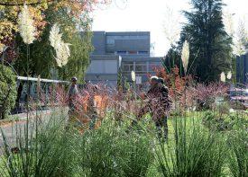Une fois découpées, les herbes de la pampa (au premier plan) seront disséminées sur les différents bacs pour en nourrir la terre. ©Michel Duvoisin