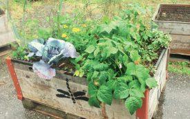 Des jardins de poche de ce type auraient pu fleurir sur la voie publique. ©DR