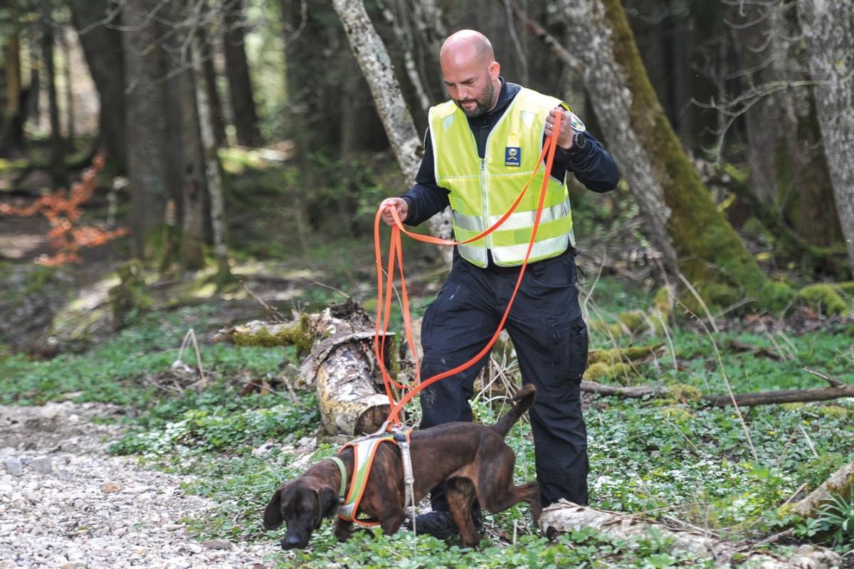 Opérations spéciales des brigades canines