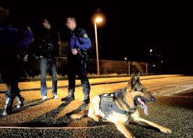 La brigade canine a été déployée pour retrouver l'auteur (images prétextes). ©Jacquet-a