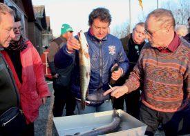 Le départ de la pesée par Patrick Hippenmeyer (à dr.), au bord de la Thièle, à Yverdon-les-Bains. Enrique Garcia (au centre) a pêché, avec sa femme Cristina, la plus grosse truite (3,8 kg) de la journée. ©Roger Juillerat