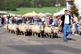 Lucien Kaenel et son troupeau de moutons. ©Gabriel Lado