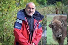 Alain Maibach dans la forêt de Suchy. Cette future terre d'accueil du bison d'Europe (en médaillon) a été choisie pour sa configuration et la diversité des milieux qu'elle propose. ©Carole Alkabes et DR/ Maibach