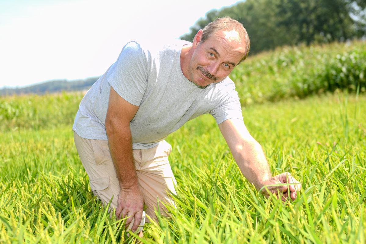 Des grains de riz pour revaloriser les tourbières