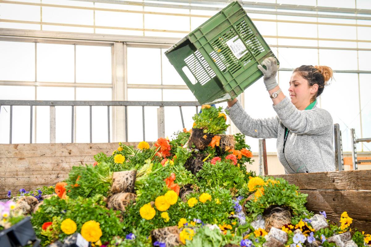 Un million de plantes jetées à la poubelle