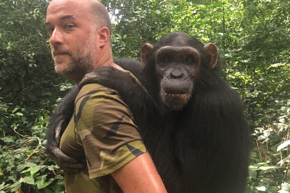 A la rescousse des chimpanzés mutilés