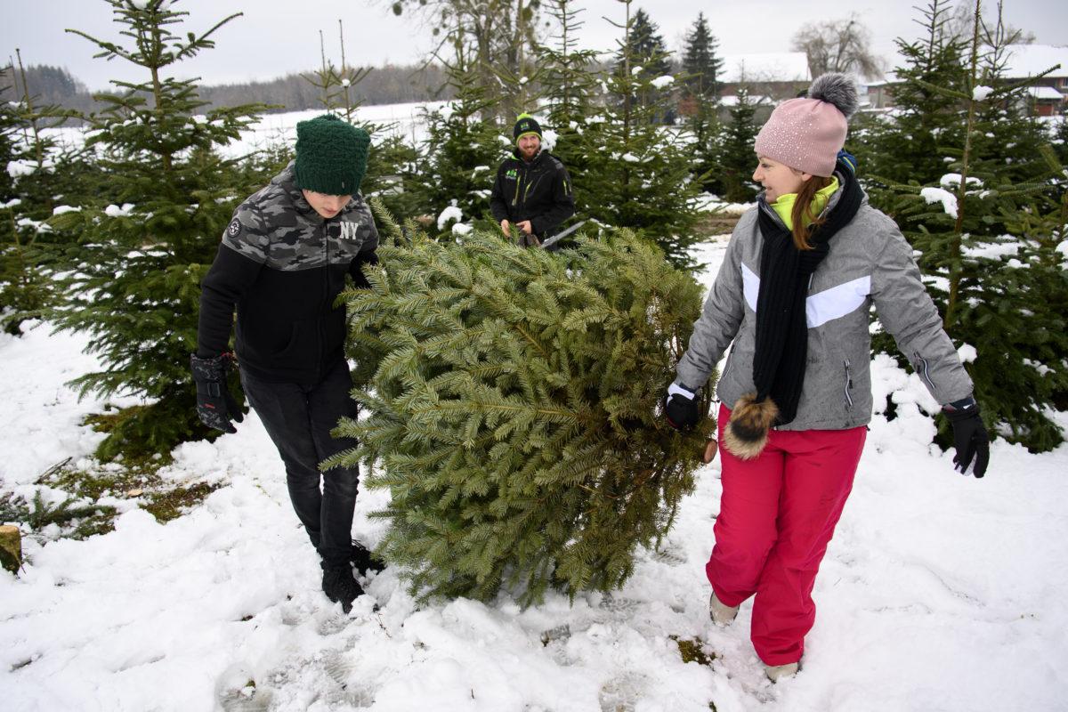 Pas de ramassage des sapins de Noël à la Fête des Rois