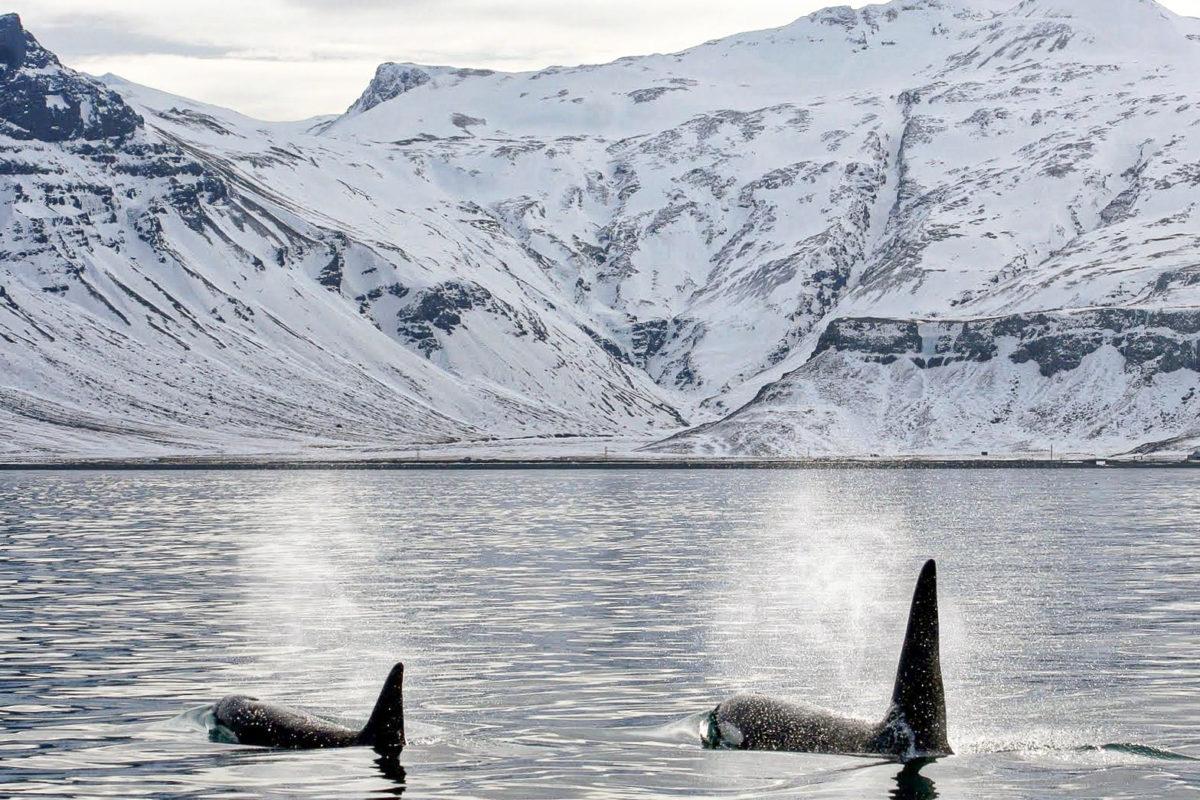 L'Atlas met  les voiles pour étudier l'Arctique