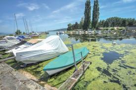Les algues prolifèrent sur les rives du lac. Si le Canton se veut rassurant, les gérants de camping évoquent un phénomène unique. ©Carole Alkabes